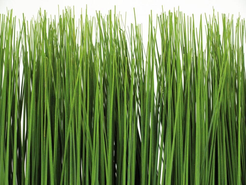Sichtschutz Kunstliche Pflanzen Kreative Ideen für Design und