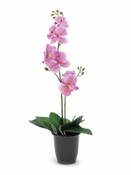 EUROPALMS Orchidee, pink, 57cm